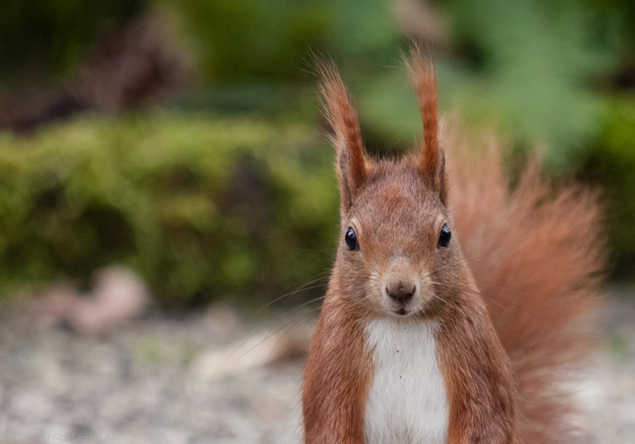 A squirrel saying hello