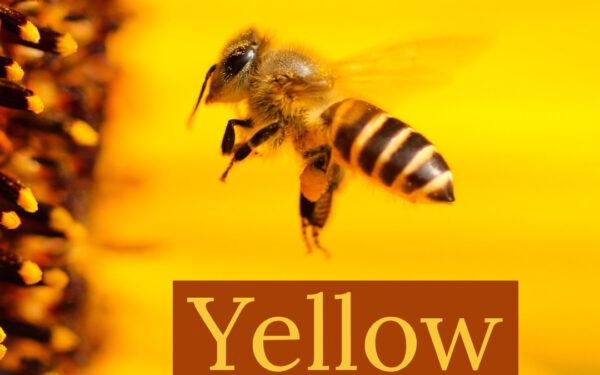 Yellow image of Bee
