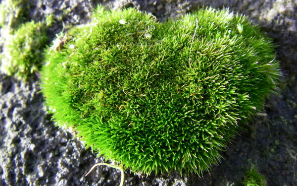 Image of a mossy heart
