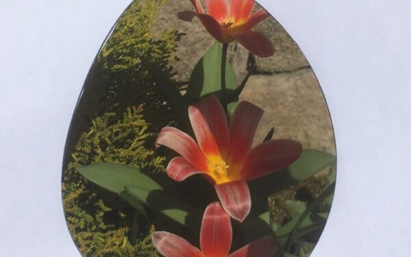 Cut-out egg shape framing tulips